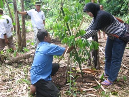Tahap I : Penanaman Pohon Gaharu